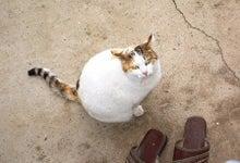 老人とブログの海-見上げる猫