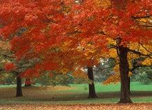 アメリカ東海岸情報-Autumn foliage