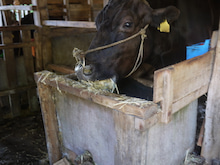 $宮崎県繁殖農家のブログ-こぼす