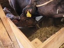 $宮崎県繁殖農家のブログ-つまみ食い