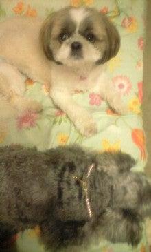 さくらブログ 〈カクテル〉犬の似顔絵-100809_1930~0002.jpg