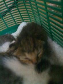 猫にSweets-100828_1443~02.jpg