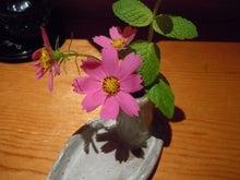 北海道の野生動植物写真-MK