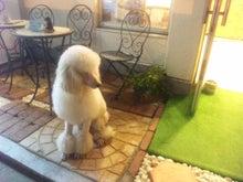 $Love&Dogのblog-100905_201429.jpg