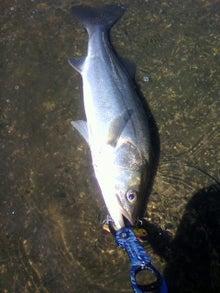 同心丸Jr.の釣り日記 『一魚一会』-2010090414030000.jpg