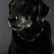 黒い犬の撮影のバック…