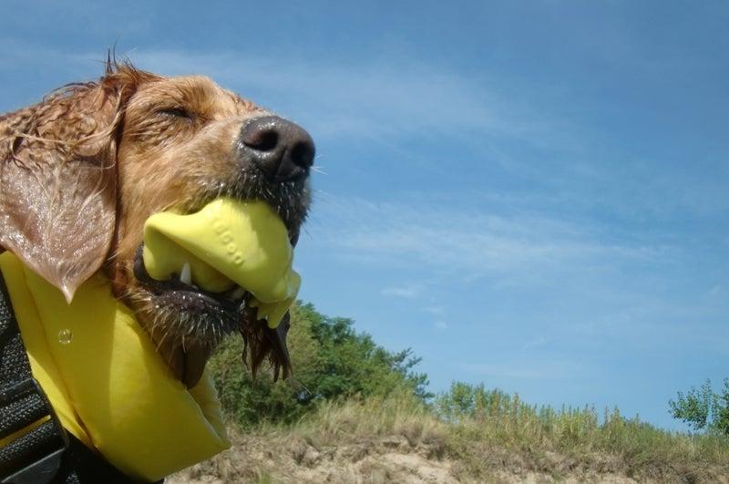 Ken's style dog photo-クリスティー