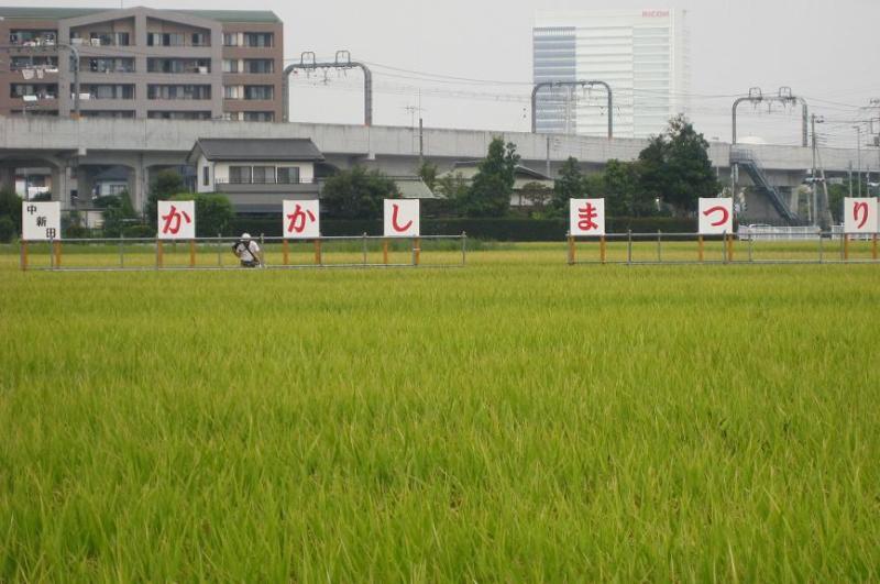 海老名かかし祭り2010 中新田 画像