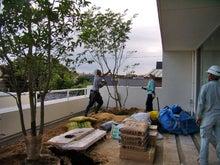 $ほめれば伸びるタイプなの。-屋上庭園に木を植えています