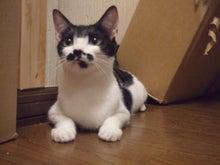 気がつけば 猫まみれ