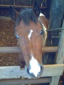 馬を愛する男のブログ Ebosi Kogen Hose Park -チェリーの素顔