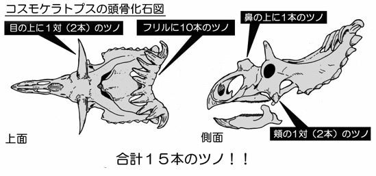 川崎悟司 オフィシャルブログ 古世界の住人 Powered by Ameba-コスモケラトプス頭骨図