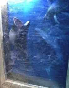 腐ってやがる・・・ぷログ-クジラの海