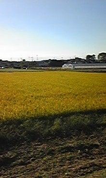 行政書士みんみんのblog-100926_072007.jpg