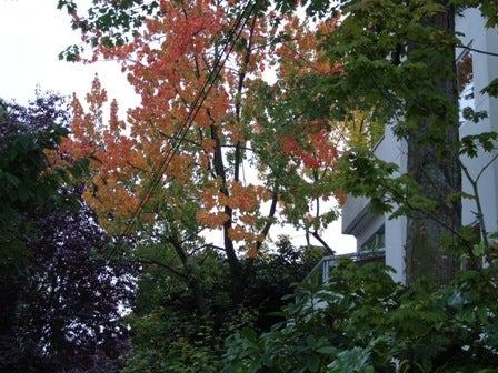 dahliaのブログ-Sep 27'10 ⑤ i Canada