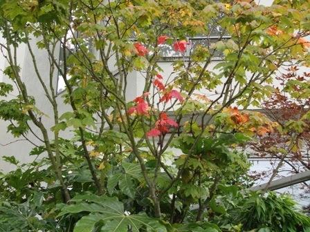 dahliaのブログ-Sep 27'10 ② i Canada