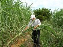 奄美大島の田畑絹織物です。