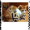 猫のアロママッサージの画像