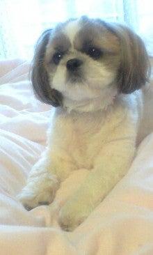 さくらブログ 〈カクテル〉犬の似顔絵-100930_0738~0001.jpg