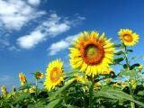 $★MC・永倉由季ブログ★ナガクラなるままに~いつもココロに太陽を~