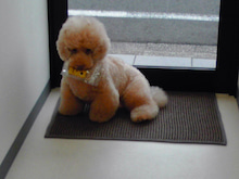 $DOG SALON A-ROOM-KC3V0101.jpg