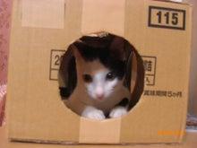 するるとネコの穴