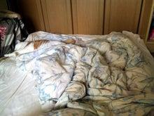$ちびログ!-爆睡猫
