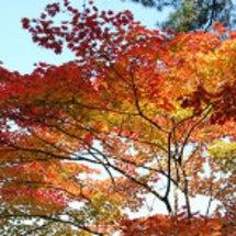 秋フォルダ