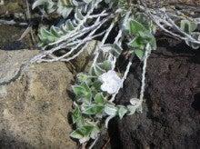 小笠原エコツアー 父島エコツアー         小笠原の旅情報と小笠原の自然を紹介します-アサガオカラクサ