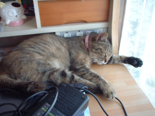 CML闘病記です。(猫達に癒されてます)