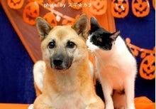 Dog Guardian★犬のマッサージ屋さんのブログ