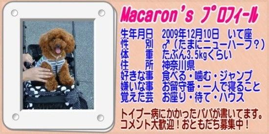 $トイプードル マカロンのハッピーライフ