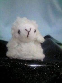 sheepon日和