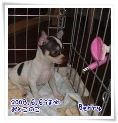 $★Berry ,Amie and Debee's Happy Life★