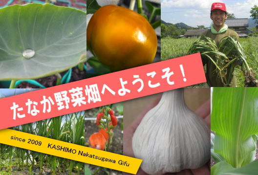 たなか野菜畑 えびカニ日記