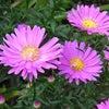 三重県津市 ㈱アポア 今日の誕生花の画像