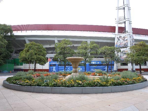 北海道の野生動植物写真-横浜スタジアム