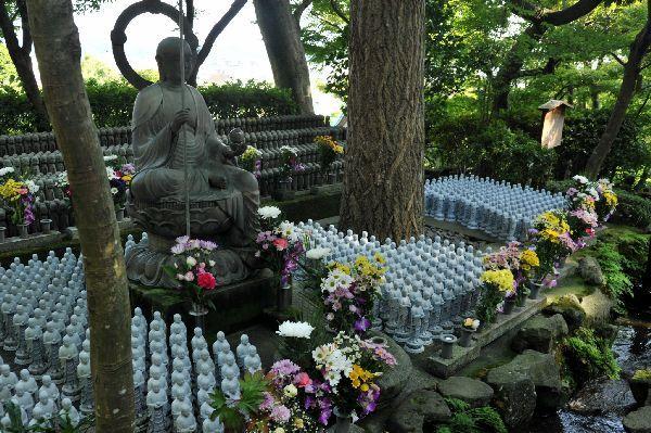 北海道の野生動植物写真-長谷寺