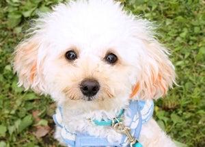 $e-1グランプリ|No.1犬決定!ペットフォトコンテストOFFICIAL BLOG