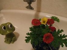 ヒロアミーの日記-トイレの花