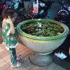 タイの小さな池の中の画像