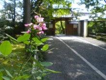 日々の花々の台所-竜安寺2
