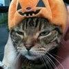 ハロウィン猫&ハート猫〜^〜^♪の画像