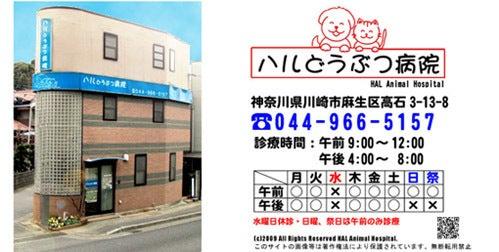 川崎市の動物クリニック ハルどうぶつ病院のブログ-ハルどうぶつ病院