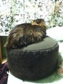 猫の好物は納豆です。