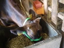 $宮崎県繁殖農家のブログ