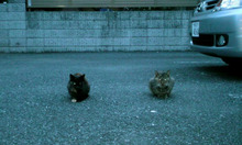 まみの1日☆。+゜((ヾo・ω・)ノ ))ヮーーッ!!-101020_1705~010001.jpg