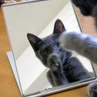 鏡の中のアイニーの記事より