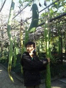 ふくたのログブー-府立植物園⑩