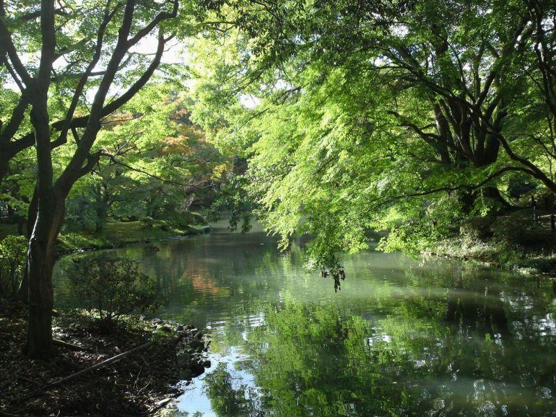 ふくたのログブー-府立植物園⑦